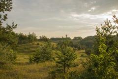 Jeune forêt Image libre de droits