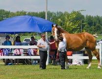 Jeune garçon avec le cheval lourd à la foire photos stock