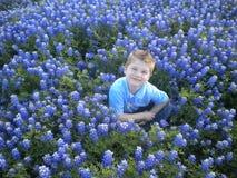 Jeune garçon dans les Bluebonnets Image libre de droits