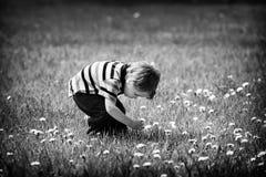 Jeune garçon en dehors de sélectionner une fleur de pissenlit - noire et blanche image stock