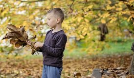 Jeune garçon jouant avec des feuilles en automne photographie stock libre de droits