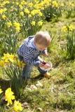Jeune garçon sur la chasse à oeuf de pâques dans le domaine de jonquille Photo stock