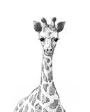Jeune giraffe Photo stock