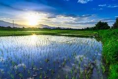 Jeune gisement de riz avec le fond de coucher du soleil de montagne Photo stock