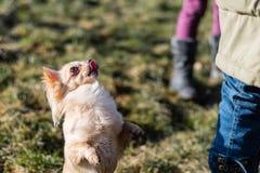 Jeune gril jouant avec son chien dehors sur un champ Photographie stock libre de droits