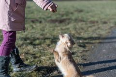 Jeune gril jouant avec son chien dehors sur un champ Images libres de droits