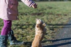 Jeune gril jouant avec son chien dehors sur un champ Photo stock