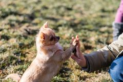Jeune gril jouant avec son chien dehors sur un champ Photographie stock