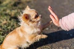Jeune gril jouant avec son chien dehors sur un champ Photo libre de droits
