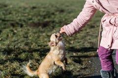 Jeune gril jouant avec son chien dehors sur un champ Image libre de droits