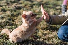 Jeune gril jouant avec son chien dehors sur un champ Photos stock