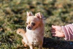 Jeune gril jouant avec son chien dehors sur un champ Photos libres de droits