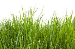 Jeune herbe Photos libres de droits