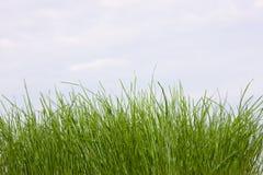 Jeune herbe au-dessus des nuages blancs photo libre de droits
