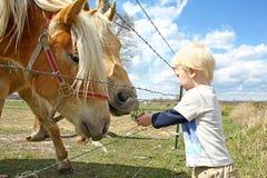 Jeune herbe d'alimentation des enfants aux chevaux à la ferme Photos stock