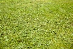 Jeune herbe fauch?e sur le fond de terrain de jeu photographie stock