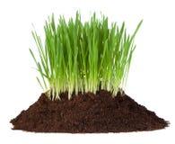 Jeune herbe s'élevant dans une pile de saleté Photos libres de droits