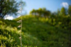 Jeune herbe verte images stock