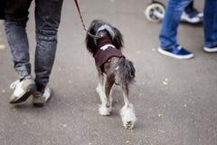 Jeune homme avec le chien sur la laisse, de nouveau à nous, marchant en parc avec son chien, le meilleur associé pour la marche Images libres de droits