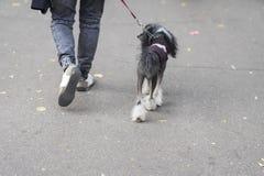 Jeune homme avec le chien sur la laisse, de nouveau à nous, marchant en parc avec son chien, le meilleur associé pour marcher, l' Photos stock