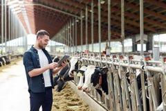 Jeune homme avec le PC et les vaches de comprimé à l'exploitation laitière Images stock