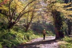Jeune homme avec un sac à dos descendant par la belle voie de forêt Images stock