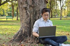 Jeune homme beau d'affaires se penchant un arbre et à l'aide de l'ordinateur portable avec son travail au parc d'été Photo stock
