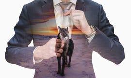Jeune homme d'affaires de double exposition attachant la cravate avec le loup de chef dans le coucher du soleil photo stock
