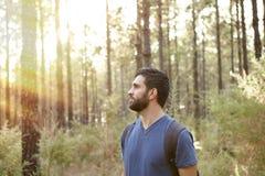 Jeune homme dans la forêt de pin Photo libre de droits