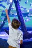Jeune homme dirigeant un poisson avec son doigt Photographie stock libre de droits