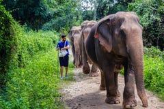 Jeune homme guidant un éléphant sur un chemin de jungle de Chiang Mai dedans image libre de droits