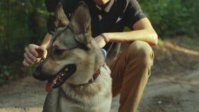 Jeune homme heureux frottant son chien affectueux dans le mouvement de forestslow clips vidéos