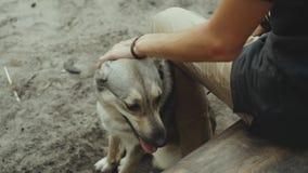 Jeune homme heureux frottant son chien affectueux dans le mouvement de forestslow banque de vidéos
