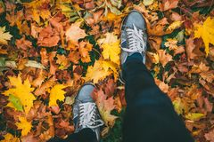 Jeune homme marchant dans des espadrilles sur la terre avec des feuilles d'automne Photo stock