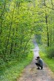 Jeune homme prenant des photos dans une forêt photographie stock libre de droits