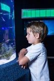 Jeune homme regardant des poissons dans le réservoir Images stock