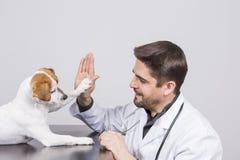 Jeune homme v?t?rinaire avec le st?thoscope, jouant avec une petite haute mignonne cinq de chien Fond blanc indoors image stock