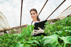 Jeune ingénieur féminin d'agriculture inspectant l'usine Image stock