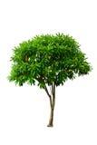 Jeune isolat d'arbre Photographie stock libre de droits