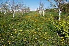Jeune jardin de floraison photos libres de droits