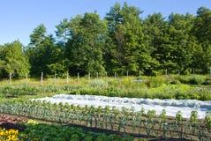 Jeune jardin soigné et rangé photo stock