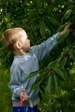 Jeune jardinier Photos stock