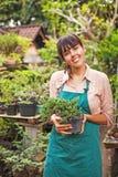 Jeune jardinier avec des bonsaïs images libres de droits