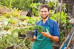 Jeune jardinier avec des bonsaïs photographie stock libre de droits