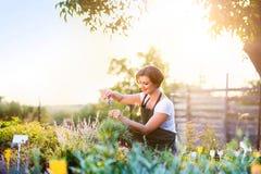 Jeune jardinier coupant peu d'usine de fleur, nature ensoleillée verte images libres de droits