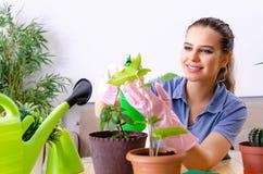 Jeune jardinier f?minin avec des usines ? l'int?rieur photos stock