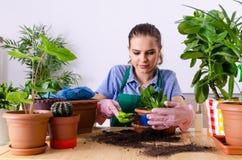 Jeune jardinier f?minin avec des usines ? l'int?rieur photos libres de droits