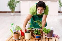 Jeune jardinier masculin avec des usines ? l'int?rieur image libre de droits