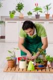 Jeune jardinier masculin avec des usines ? l'int?rieur image stock