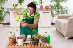 Jeune jardinier masculin avec des usines ? l'int?rieur images libres de droits